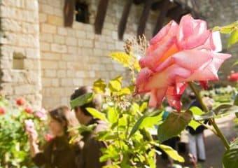 Roses dans les jardins du Prieuré Saint-Cosme